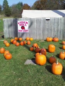 Pumpkins scattered around the grounds